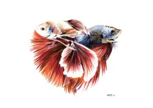 Siamese Fish Home/Office Decor - Art Print