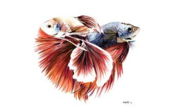 Siamese Fish Home/Office Decor - Art Print